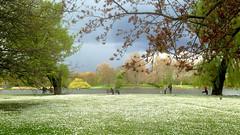 Park Life (An Italian Girl at Heart) Tags: people london birds landscape serene regentspark iphone