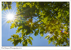 May Sunshine (Paul Simpson Photography) Tags: uk trees england tree nature leaves sunshine bluesky sunburst f22 newleaves niceweather photosof imageof photoof imagesof sonya77 paulsimpsonphotography may2016
