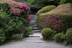 Shisen-do in May 5 (PV9007 Photography) Tags: japan garden temple japanese kyoto may line   azalea  northern kansai garten satsuki  steingarten dentetsu   japanischer 5    ichijoji shisendo eizan rakuhoku       shisendou    jozanji jouzanji