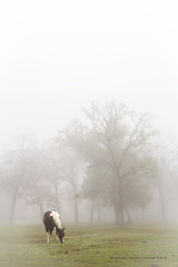 college-station-12-24-2015-8760 (m.torkildsen) Tags: horses fog collegestation