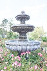 11875205_10153099674437076_3563071791770288904_o (jmac33208) Tags: park new york roses rose garden central schenectady