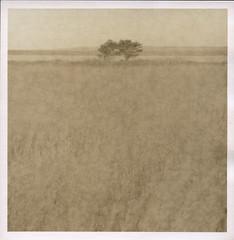 (Mark Magin) Tags: 6x6 lith marthasvineyard acros100 hasselblad500cm darkroomprint moerscheasylith adoxmcc110