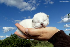 Cat newborn (AndreiaFMS) Tags: cats baby portugal animal animals cat lumix hand photos sleep mini panasonic gato newborn redondo alentejo animais mo animalia gatinho cria photographies alentejano recmnascido andreiasarnadinha