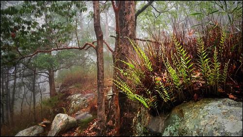 Ravensbourne National Park (16)