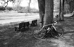 break (20EURO) Tags: road park italy holiday motion beautiful bike bicycle sport yellow speed training cycling healthy ride wind run hobby photograph enjoy refreshing roadbike grandtour shimano wilier tooling wiliertriestina xperiaz3 sonyso01f