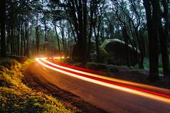 Untitled (Rui  Pereira) Tags: trees light landscape colours sintra diagonal lighttrails curved peninha