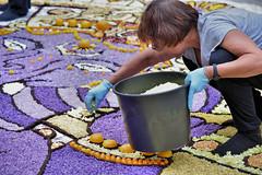 DSC_2525   infiorata 2016 (3 gigio) Tags: people work country di fiori pietra petali con paesaggio fatte lavoro ligure figura infiorata esecuzioni