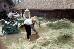 32-162 (ndpa / s. lundeen, archivist) Tags: houses homes winter people woman house color building fall film home rural 35mm buildings workers women village basket rice nick working taiwan machine rake worker thatchedroof 1970s 1972 hualien 32 taiwanese eastcoast unidentified raking thresher threshing dewolf rurallife thatchroof republicofchina easterncoast easterntaiwan nickdewolf photographbynickdewolf hualiencounty ricethresher threshingrice reel32