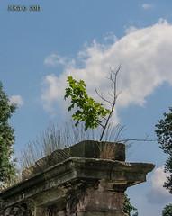 Zscheckwitz, Mauerrest am Wegrand (joergpeterjunk) Tags: outdoor canonpowershotsx40 bridgekamera mauer old alt zscheckwitz sachsen ruine