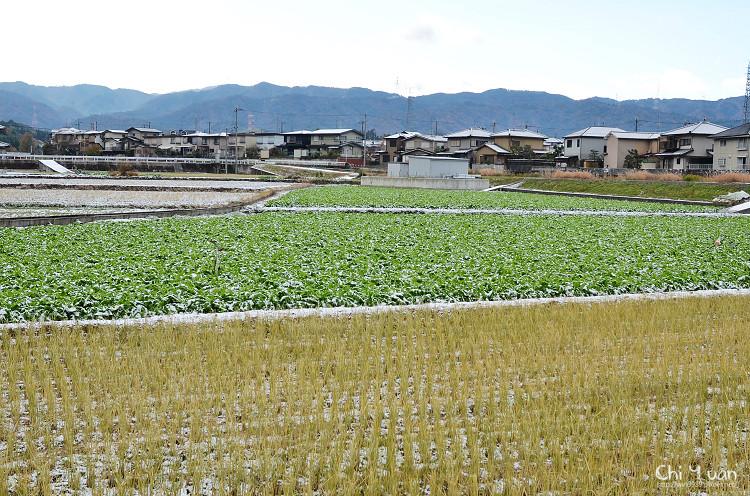 鵜之川遊步道11.jpg