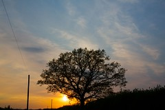 yesterday (peet-astn) Tags: sunset sun tree wire tramonto poles yesterday