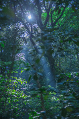 light in the forest (Shin-Okamoto) Tags: cliff green nature rain forest moss nikon d800 freshgreen