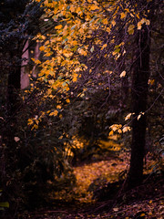 "Beautiful autumnal walks in Melbourne • <a style=""font-size:0.8em;"" href=""http://www.flickr.com/photos/44919156@N00/8724878514/"" target=""_blank"">View on Flickr</a>"