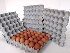 แผงไข่กระดาษ ถาดไข่กระดาษ pulp mold eggtray-1