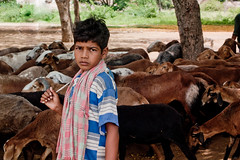 _7312707 (Freddy Berlin) Tags: world road travel school boy summer portrait india man flower heritage colors beautiful face bike statue shop pen landscape temple four person monkey eyes sitting colours child cola skin market shepherd labor south prayer religion group vivid olympus carving unesco kind study goats palmtree abroad micro hindu hinduism coca madurai indien junge sadhu hampi reise reportage oly thirds ep1 ep2 ep3 schäfer mft 1442 ep5 mirrorless