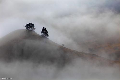 Photo - Trees poke up through the mist on Stony Hill.