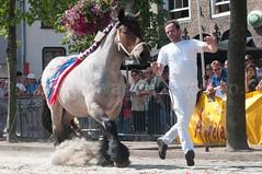 DSC_2410 (Ton van der Weerden) Tags: horses horse dutch de cheval belgian nederlands belges draft chevaux belgisch trait ijzendijke trekpaard trekpaarden ellievandekorn