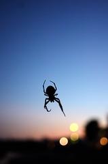 Spider in the night (Olli Ronimus) Tags: sky harbor spider frankfurtammain osthafen