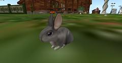 Mini Rex Too Chinchilla (Bea Shamrock) Tags: bunny bunnies sl secondlife v26 ozimals wonderwarren