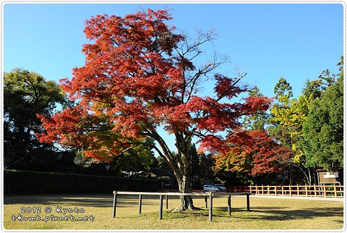 上賀茂神社 (8).jpg