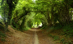tree tunnel-Explored  over 3,000 views thanks ! (blue angel66) Tags: west tree sussex nikon d tunnel halnaker
