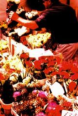 FX-D at Columbia Road Flower Market (Cris Ward) Tags: yashica yashicafxd slr film manual vintage 35mm lomography lomo lomographyuk crossprocessing crossprocess crossprocessed xpro c41 e6 slide transparency reversal color colour colourful colorful colorshift colourshift market street shopping shop stall columbiaflowermarket columbiaroad aldgate east london uk britain summer floers flowers flowering plants garden gardening green fuji fujichrome fujifilm velvia pink purple 100 fujichromevelvia100 candid people portrait