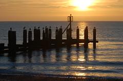 The morning sentries on watch (Kirkleyjohn) Tags: sea sun seagulls seascape sunrise seaside seashore