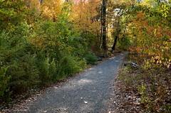 On an Autumn Path #6 (CVerwaal) Tags: autumn centralpark autumncolors ricohgr northwoods autumninnewyork