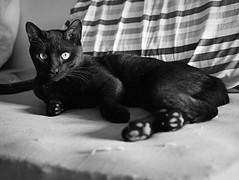 Darth Vader (sLorenzi) Tags: bw black cat lumix sigma f28 30mm ruby3 ruby10