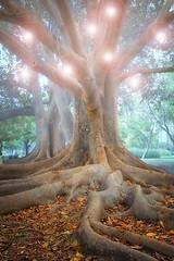 Parque de fantasa (Zu Sanchez) Tags: trees tree canon arbol navidad fantastic arboles magic fantasy magical magia zsnchez zusanchez