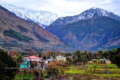 Chamunda Himachal Pradesh (Manudev Bhardwaj) Tags: mountain snow green forest snowflakes peaks himachal dharamshala beauti beutiful snowcap deepforest kangra snowpeaks snowmountain chamunda lushgreen beautifulhimachal