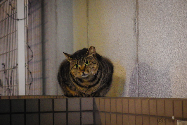 Today's Cat@2014-02-28