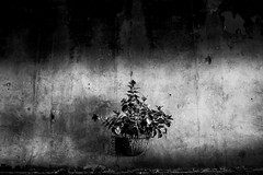 Untitled (luca_ds) Tags: light plant wall vase hanging staines