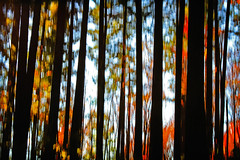 as hushed as a deep forest (1crzqbn) Tags: trees sunlight color texture nature shadows bokeh motionblur 7d pdx icm washingtonpark intentionalcameramovement 1crzqbn ashushedasadeepforest