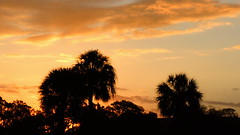 Sunrise March 7th. (Jim Mullhaupt) Tags: morning trees wallpaper sky sun storm silhouette night clouds sunrise palms landscape dawn flickr mullhaupt cloudsstormssunsetssunrises jimmullhaupt