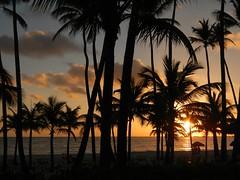 Sunrise (tquist24) Tags: trees sun tree beach sunrise nikon republic dominicanrepublic palmtrees palmtree punta tropical coolpix cana puntacana dominica caribbeansea bavaro bavarobeach aw100 cloudsstormssunsetssunrises secretsroyalbeach nikoncoolpixaw100