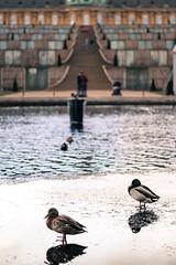 Sans Soucis (Berlin Gallery) Tags: winter berlin canon patrick palais enten schloss teich potsdam sans lemoine 2015 soucis sanssoucis berlingallery 1100d