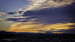 Snow Geese at sunrise over Fir Island after an overnight stay on Skagit Bay. (Terry Green) Tags: snow bird nature birds landscape island bay geese washington nikon conway wildlife goose fir skagit skagitvalley 2470mm d810 skagitcountywashington terrygreen firislandgamereserve