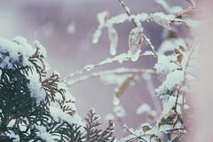 winter (sugaryxxx) Tags: winter snow nature  bestshot