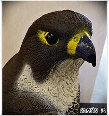 Ave---(bird (# RAMN Mortadelo #) Tags: barcelona ojo ave pico cabeza mortadelo65pp