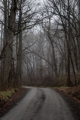 Foggy Forest (Evan Robohm) Tags: road county winter fog rural forest foggy tracks overcast tire gravel loudoun 500px ifttt