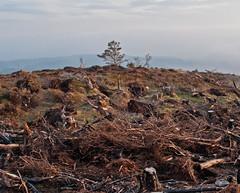 tree too (Lezzo22) Tags: scotland greatglen