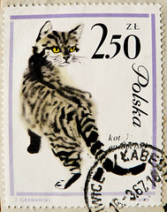 great stamp Poland Polska 2.50 zł (cat, Katze, félin, gata, kotka, ко́шка, el gato, felino, gatta, 猫) znaczki znaczków pocztowych Polska bélyeg Lengyelország Briefmarken Polen марки Польша bollo francobolli Polonia الطوابع البريدية بولندا timbres Pologne (stampolina, thx ! :)) Tags: cats postes stamps poland polska stamp polen gata felino 猫 tem katzen polonia postzegel selo félin bolli elgato pologne sello sellos kotka briefmarken польша polsko frimärken 邮票 francobollo selos puola pólland timbres lenkija frimærker марки francobolli bollo 切手 zegels 波兰 우표 zegel polija polandia znaczki markica スタンプ بولندا perangko frimerker पोलैंड 폴란드 pulları طوابع πολωνία пољска ко́шка แสตมป์ γραμματόσημα маркица bélyegek टिकटों antspaudai razítka