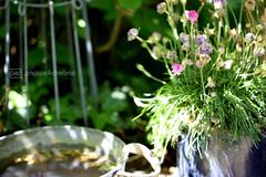 in my secret garden - 6 (photos4dreams) Tags: flower macro blume makro secretgarden photos4dreams photos4dreamz p4d