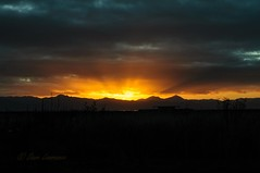 Sunrise  at Miranda - DEL_3010-LRwm (lawde13) Tags: newzealand sunrise
