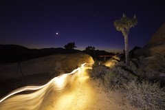 Wil-o-Wisp of Joshua Tree (mariah.arianna) Tags: light moon tree night stars twilight paint slow desert joshua dusk mojave shutter bushes foreground