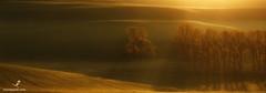 #179. Golden rays of sunrise. Moravia. Czechia. (paveloskin) Tags: sunrise golden czechrepublic rays photooftheday czechia moravia       photography travel photo photographers landscapes photograph adventure traveling landscape   adventures   photolovers phototour