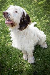 Sidney (Mark Carline) Tags: dog sidney
