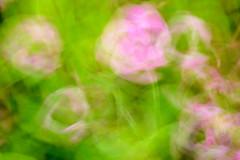 Blumen abstrakt II (Bluespete) Tags: flowers art germany movement nikon expression fineart blumen cc slowshutter psi farbig langzeitbelichtung formen mehrfachbelichtung wischen d7100 bluespete farbenabstrakt