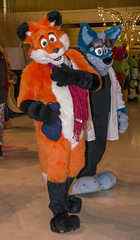 _DSC4245 (Acrufox) Tags: midwest furfest 2015 furry convention december hyatt regency ohare rosemont chicago illinois acrufox fursuit fursuiting mff2015